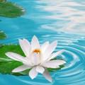 Best-Flower-Wallpaper-for-Desktop-Background