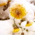 the_brave_flower_by_kinlyu-d341tvv
