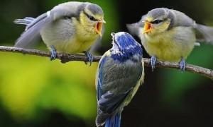 две-птичета-срещу-едн