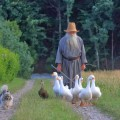 монах пасе патки