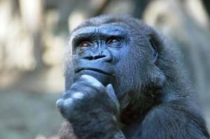 Thinking-Monkey (1)