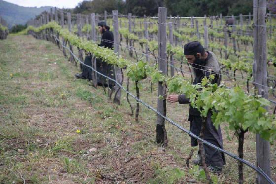 monks-vine3570_n.jpg.w560h373
