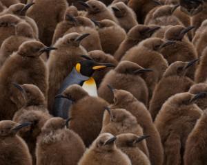 Yandex-Images-2015-01-21