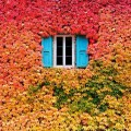 autumn-photography-2