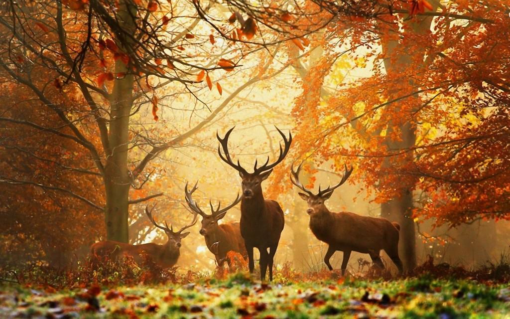 www.GetBg.net_Animals_Giraffes__deer__camels__zebras__artiodactyls_Deer_in_the_woods_034364_ (1)