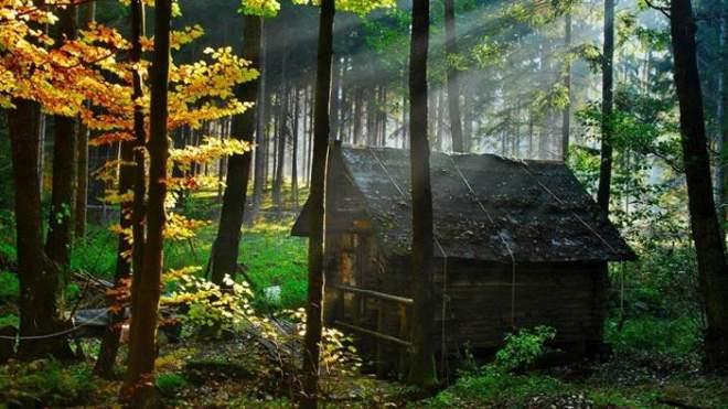 къща_в_гората_