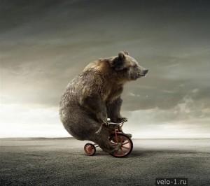 Medvedi-na-velosipede007 (1)