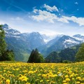 Nature_Beauty_Ukrainian_Carpathians_099812_